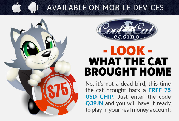 Cool cat casino bonus codes 2014 dh poker texas online